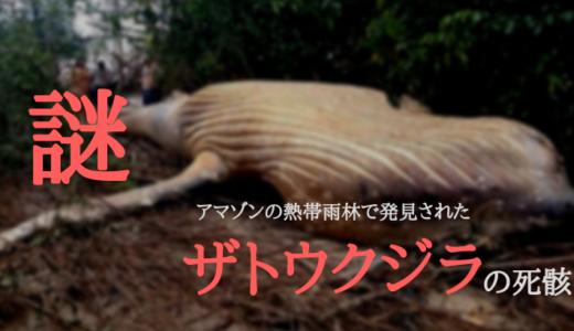 【謎】アマゾンの熱帯雨林でザトウクジラの死体が発見された。